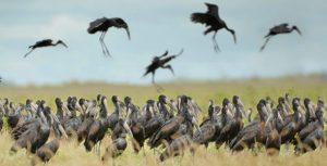 Rusis Birding